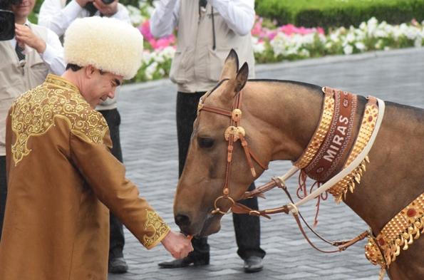 Horse-12
